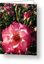 Pink Flaminco Rose 2 Greeting Card