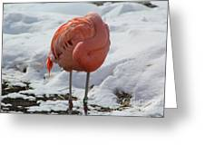 Pink Flaming In Winter Greeting Card