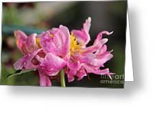 Pink Flaming Peony   Greeting Card