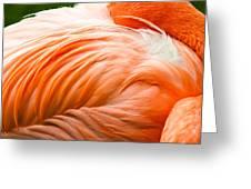 Pink Flamingo Greeting Card by Viacheslav Savitskiy