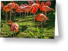 Pink Flamingos Greeting Card