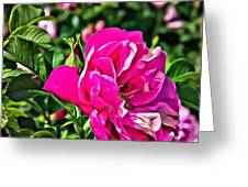 Pink Floral Greeting Card