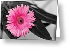 Pink Flower Greeting Card by Amr Miqdadi