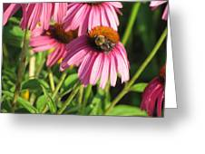 Pink Flower And Bee Greeting Card