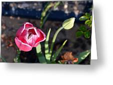 Pink Flower And Bud Greeting Card
