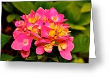 Pink Flower Austin Greeting Card