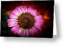 Pink Flower Blooming Greeting Card