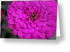 Pink Flower Blossoming Greeting Card