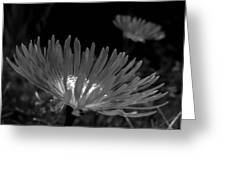 Pink Flower-bw Greeting Card