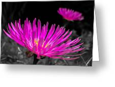 Pink Flower In A Green Grass - Splash Greeting Card