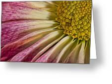 Pink Flower Macro Greeting Card