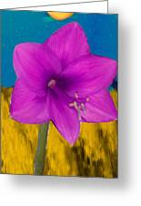 Pink Flower On A Fall Evening Greeting Card