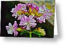 Pink Flower On Brier Island In Digby Neck-ns Greeting Card