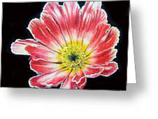 Pink Flower Painting Oil On Canvas Greeting Card by Drinka Mercep