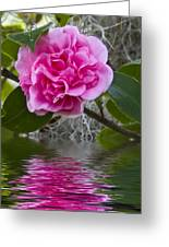 Pink Flower Reflection Greeting Card