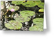 One Pink Water Lily With Lily Pads Greeting Card