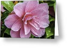 Pink Flower With Rain Drops Greeting Card