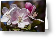 Pink Flowering Crabapple Blossoms Greeting Card