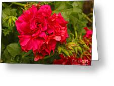 Pink Flowers Blooming Greeting Card