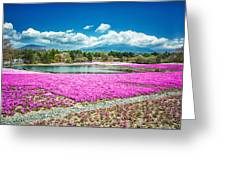 Pink Flowers Blue Sky Greeting Card