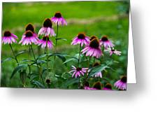 Pink Flowers In Maine Greeting Card by Jason Brow