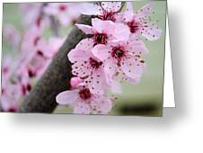 Pink Flowers On A Flowering Tree Greeting Card