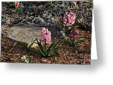 Pink Flower's With A Lime Stone Rock Greeting Card