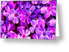 Pink Flox Everywhere Greeting Card
