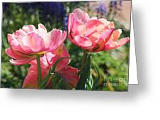 Pink Fluffy Tulips Greeting Card
