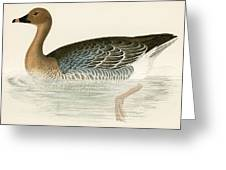 Pink Footed Goose Greeting Card