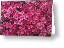 Pink Full Frame Azalea Blossoms Greeting Card