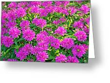 Pink Garden Flowers Greeting Card