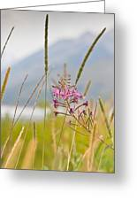 Pink Gem - Fire Weed Wildflower In Grand Teton National Park - Wyoming Greeting Card