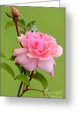 Pink Gem Greeting Card