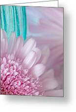 Pink Gerber Daisy Greeting Card