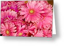 Pink Gerbera Daisies Greeting Card