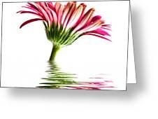 Pink Gerbera Flood 2 Greeting Card