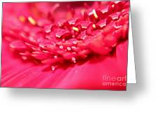 Pink Germini Daisy Greeting Card