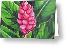 Pink Ginger Lily Bloom Greeting Card