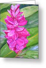 Pink Ginger Greeting Card