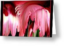 Pink Gladiolas Abstract Greeting Card