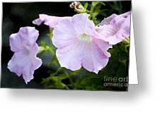 Pink Glory Greeting Card