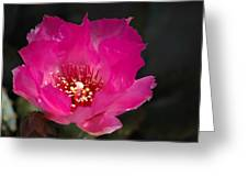 Pink Glory  Greeting Card