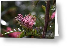 Pink Grevillea Greeting Card