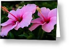 Pink Hibiscus II Greeting Card