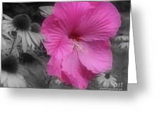 Pink Hibiscus In Partial Color Greeting Card