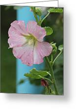 Pink Hollyhock And Rain Greeting Card