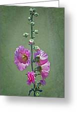 Pink Hollyhocks Greeting Card