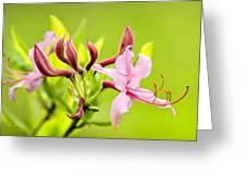 Pink Honeysuckle Flowers Greeting Card