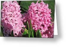 Pink Hyacinth Greeting Card